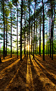 Phil Koch - Through the Pines