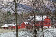 Red Barn In Winter Photos - Through The Trees by Stephanie Calhoun