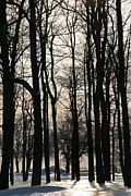 Through The Winter Trees Print by Heather Allen