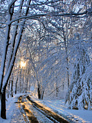 Winter Roads Art - Through the Woods by Kristin Elmquist