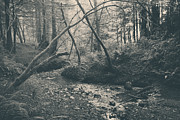 Black And White Nature Landscapes Posters - Through the Woods Poster by Laurie Search