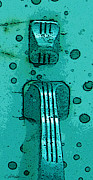Printmaking Digital Art - Thumb Slide for a Painter in TEAL by Cathy Peterson