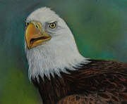 Bald Eagles Pastels Posters - Thunder Poster by Jean Cormier