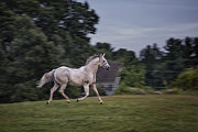 Horse Run Photos - Thundersoul by Evelina Kremsdorf