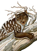 Illustration Technique Art - Thylacoleo, A Marsupial Lion by H. Kyoht Luterman