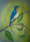 Flycatcher Pastels Prints - Tickells Blue Flycatcher Print by Nirosh Perera