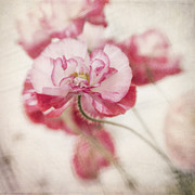 Texture Floral Framed Prints - Tickle Me Pink Framed Print by Priska Wettstein