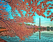 Cherry Blossoms Photo Originals - Tidal Basin Cherry Blossoms by Boyd Alexander