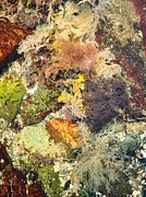 Debbie Green - Tidal Pool Color