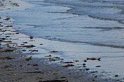 Marilyn Wilson - Tide Coming In