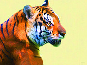 Mammals Digital Art Prints - Tiger . 7D2058 . Painterly Print by Wingsdomain Art and Photography
