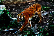 Tiger Fractal Framed Prints - Tiger 4217 - F Framed Print by James Ahn