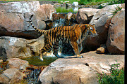 Jeremy Linot - Tiger and Waterfall