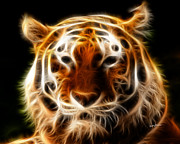 Anthony J Caruso Prints - Tiger Print by Anthony Caruso
