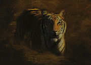 Southwick Framed Prints - Tiger Art Framed Print by Jayne Carney
