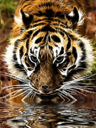 Tiger Fractal Photos - Tiger at the waters edge by Steev Stamford
