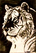Featured Drawings Framed Prints - Tiger Boss Framed Print by Lynette  Swart
