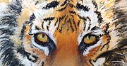 Michelle Wolff - Tiger Close Up