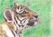 Luciana Raducanu Art - Tiger cub colored drawing by Luciana Raducanu