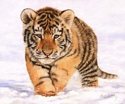 Tiger Cub Posters - Tiger Cub in Snow Painting Poster by David Stribbling