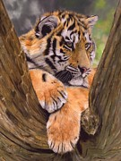 Snow Tree Prints Posters - Tiger Cub Painting Poster by David Stribbling