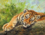 Wolf Painting Posters - Tiger Cub Resting Poster by David Stribbling