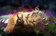 Fuschia Photo Prints - Tiger Dreams Print by Aimee Stewart