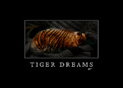 Tiger Dream Framed Prints - Tiger Dreams Poster Framed Print by Kathi Shotwell