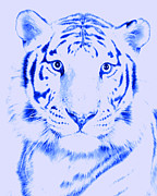 E Black Framed Prints - Tiger Eye Framed Print by J D Owen