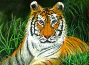 Cubs Pastels Posters - Tiger Eyes - Pastel Poster by Antonia Citrino