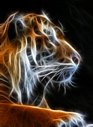 Cat Mixed Media Prints - Tiger Fractal 2 Print by Shane Bechler