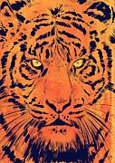 Giuseppe Cristiano - Tiger