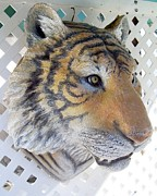 Cat Sculpture Framed Prints - Tiger Head life-size wall Sculpture Framed Print by Chris Dixon