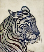 Photomanipulation Drawings Prints - Tiger II Print by Debbie Portwood