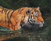 Tiger Paintings - Tiger in Deep by David Stribbling