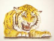 The Tiger Drawings - Tiger in rage by Dag Sla