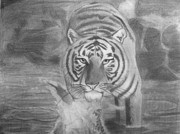 The Tiger Drawings - Tiger in the Water by Maya Pettway