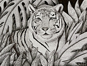 Jeanette K - Tiger