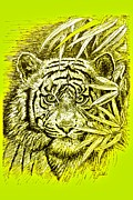 The Tiger Drawings - Tiger - King Of The Jungle by Gitta Glaeser