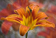 Barbara Smith Metal Prints - Tiger Lily Metal Print by Barbara Smith