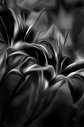 Lillies Digital Art Prints - Tiger Lily bw Print by Bill  Wakeley