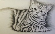 Featured Drawings Prints - Tiger Print by Lisa Marie Szkolnik