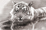 Tigress Digital Art - Tiger Love Water by Manjot Singh Sachdeva
