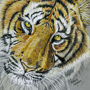 Wildlife Framed Prints Drawings Framed Prints - Tiger  Framed Print by Michelle Wrighton