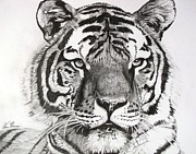 Tiger On Piece Of Paper Print by Kevin F Heuman