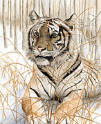 Marshall Bannister - Tiger On Snow