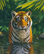 Animal Portraits Posters - Tiger Pool Poster by MGL Studio - Chris Hiett