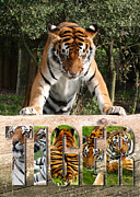 Stood Digital Art Framed Prints - Tiger Poster 2 Framed Print by John Hebb