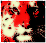 Tilly Art Framed Prints - Tiger Red Framed Print by Tilly Williams
