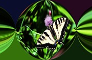 Tiger Swallowtail Digital Art Framed Prints - Tiger Swallowtail Digital art Framed Print by Don Mann